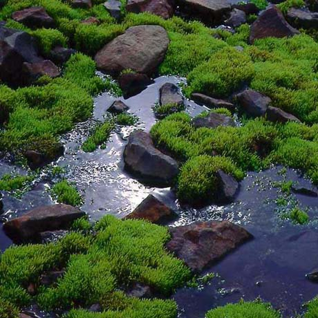 Moss_and_water.jpg